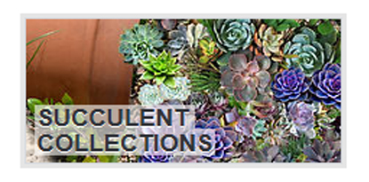 succulent-collections